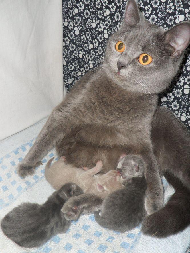 Url кошки это кошки 1 фев 2011 первая