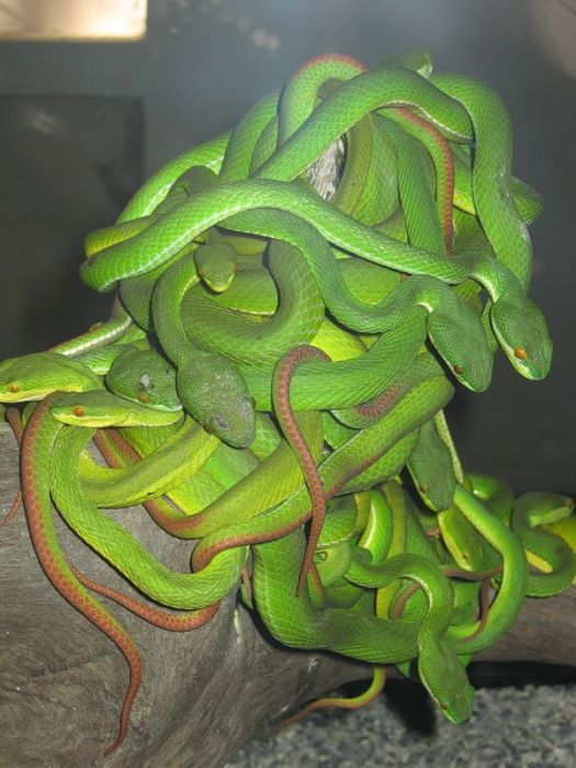 Картинка, Змея гламурные картинки на рабочий стол и обои для рабочего.