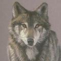 graybrother