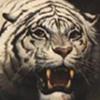 Tiger[ALONE]