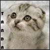 .:TANDA:.