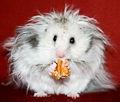 Белейшая Мышь