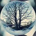 snow-shika
