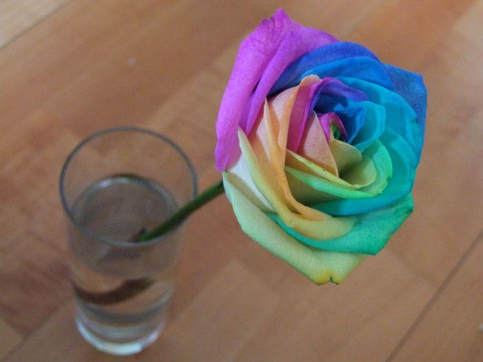 Как сделать радужная роза