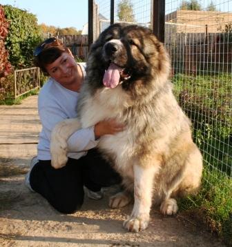 Фото пса породы кавказская овчарка с человеком.