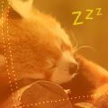 kettary_fox