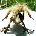 Vicious bird