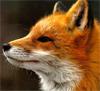 SonnenFox