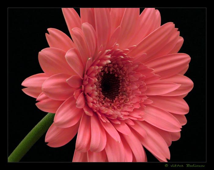 Каси я не знаю какие цветы любишь ты