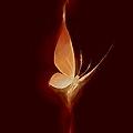 Phoenixe