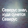 Гилва Северус Снейп