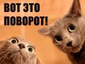 Оптимистка=)