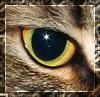 Мизантропическая кошка