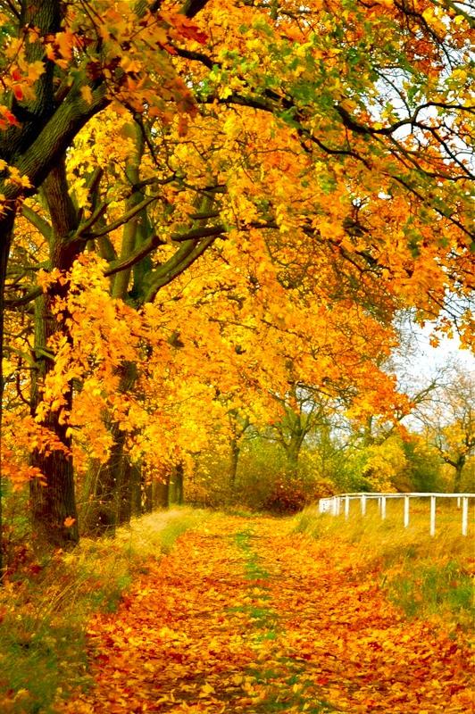Картинки на тему ранняя осень