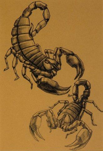 Скорпион: сексуальный гороскоп знаков Зодиака