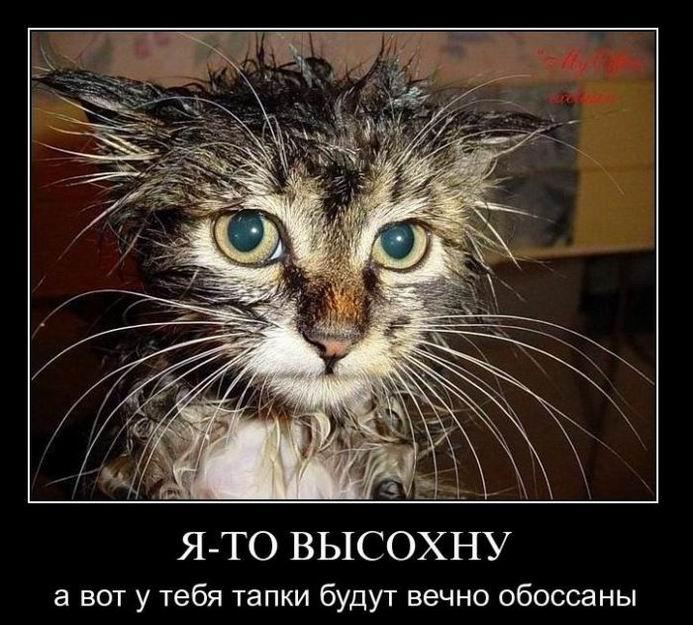http://static.diary.ru/userdir/5/9/5/5/595548/70237149.jpg