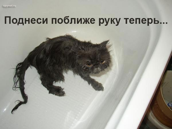 http://static.diary.ru/userdir/5/9/5/5/595548/70237158.jpg