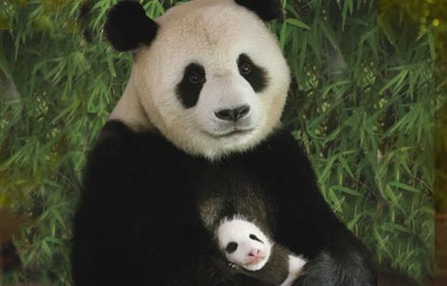 Мысли:1. Панда.