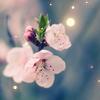 _Senshi_
