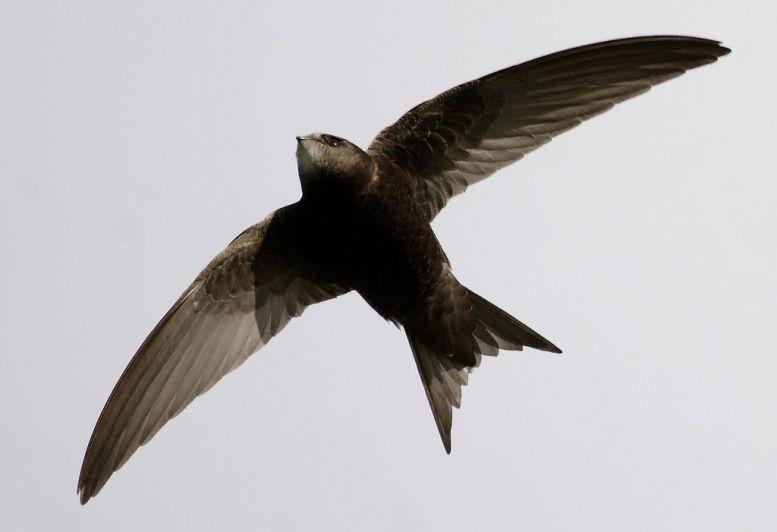 ...мире люди каждодневно контактрующие с дикими птицами.