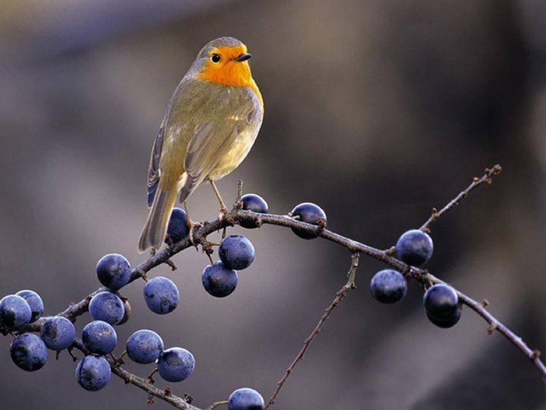 Классификация птиц.