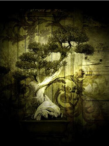 """Японское слово  """"бонсай """" переводят по-разному.  Самое распространенное толкование -  """"дерево в плошке """"."""