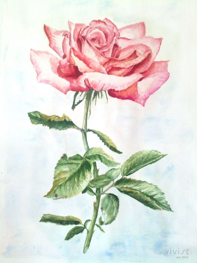 Рисунки акварелью розы