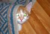 Наглядное объяснение причины того, что кошки хо...