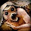 #cicada
