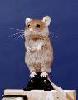 У каждой мыши должен быть свой пьедистал:)