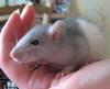 Всё ещё маленький Вениамин=))