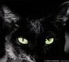 wild--cat