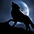 [andare per il lupo]
