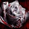 Роза подобна моему сердцу, которое истекат кров...