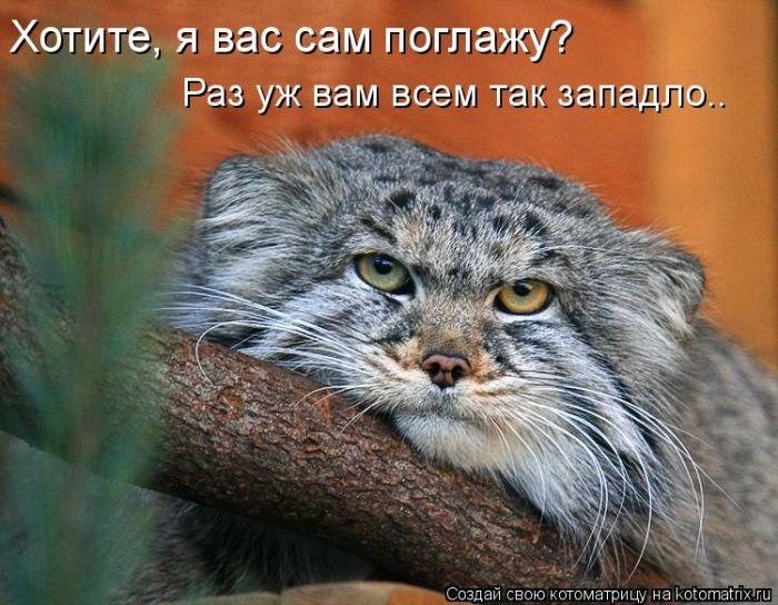 http://static.diary.ru/userdir/6/8/9/3/68937/38195929.jpg