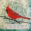 dead_mockingbird