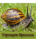 базальтовая ящерка