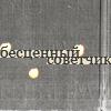 Тунлипухи