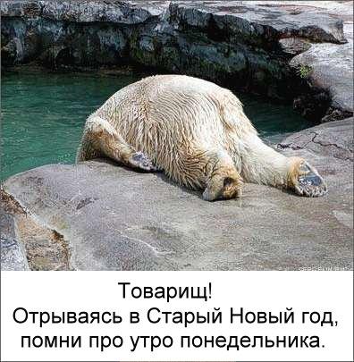 http://static.diary.ru/userdir/7/0/3/1/703121/36752621.jpg
