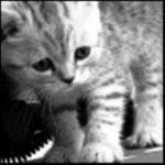 Всего лишь кошка...