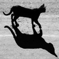 le pas de loup