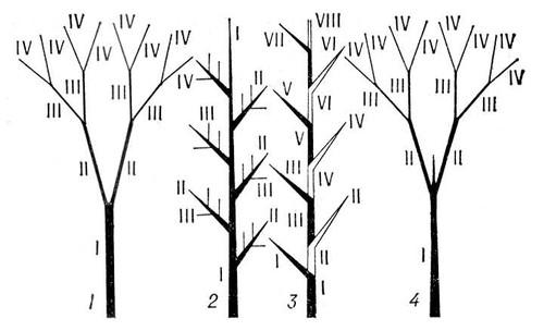 Строение стебля безпучковий