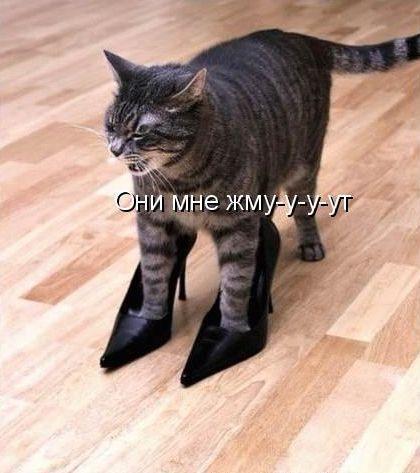 http://static.diary.ru/userdir/7/3/6/8/7368/30209578.jpg
