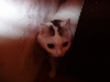 Моя кошка - Мяута