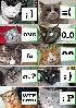 Кошки. :) И этим почти все сказано. Составителю...