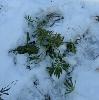 Вот такая вот флора встречается зимой в лесах б...