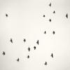 берегите птиц