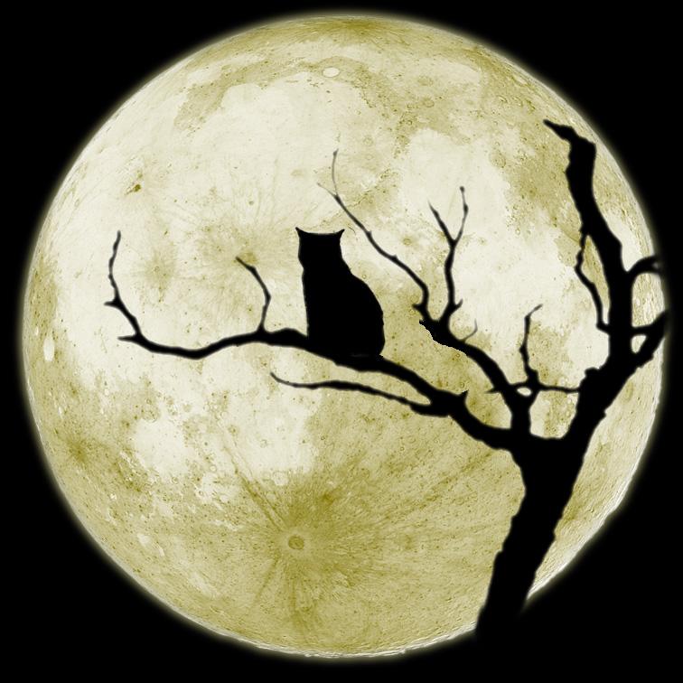 Лунный лунный лунный кот Cвет из лужи пьёт и пьёт. легенды. рассказы. @темы.