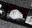 Темный... и вроде бы Кот