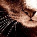 ~:Кошка:~